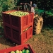 Geobox_Apple-Harvest-Crate